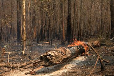 Austraalia rallil on metsatulekahju
